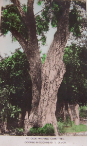 POSTCARDWISHINGCORK TREE COOMBE IN TEIGNHEAD S DEVON
